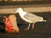 mcdonalds rubbish 2