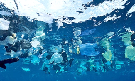 Millions of dicarded plastics bags pollute our oceans