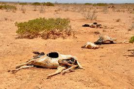 droughteastafrica