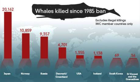whales killed
