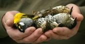 birdsneonictonoids