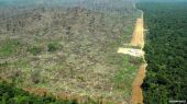 deforestationbrazilgreenpeace